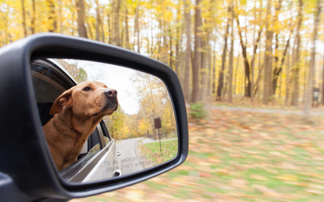 Fall Driving Safety Tips: Avoid Single-Car Crashes